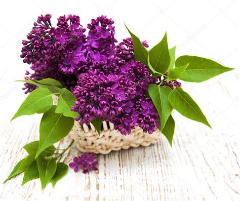 fiori estivi fiori estivi lilla nel cestino foto stock 169 ls992007