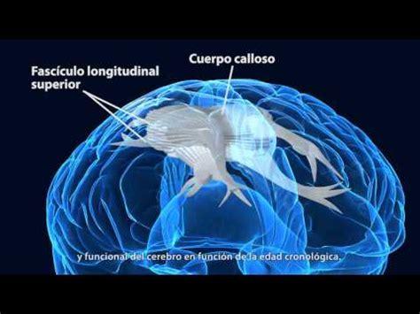 cerebro adolescente el cerebro adolescente escuela con cerebro