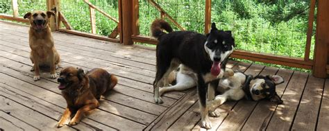 rocky mountain puppy rescue rehabilitation rocky mountain animal rescue