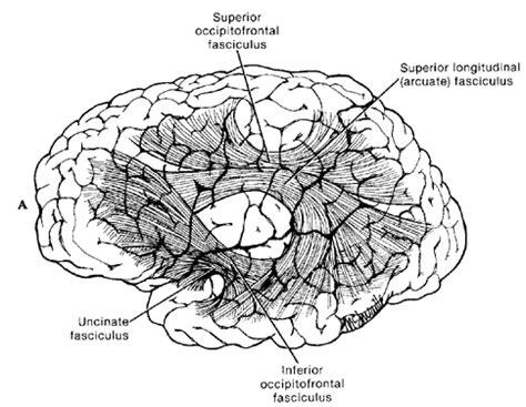 ideasional adalah otak pikiran neuroscience neuropsikologi