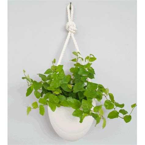 Indoor Wall Hanging Planters by 1000 Images About Hanging Wall Planters For Ellis Patio