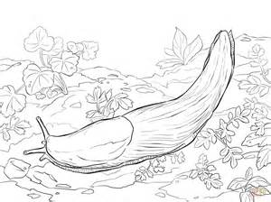 slug template slug terra coloring sheets coloring pages