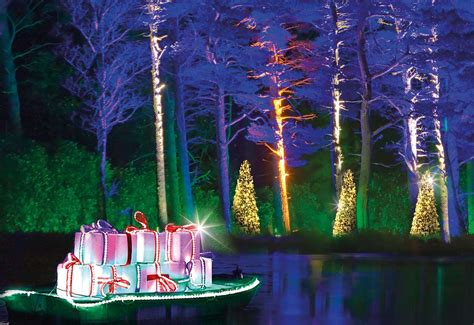 christmas  bedgebury    forest  festive lights