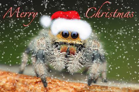 christmas tidings  vulcan termite  pest control