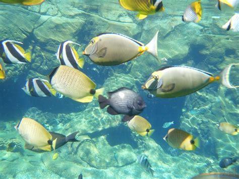 bringing a to hawaii should i bring snorkel gear to hawaii go visit hawaii