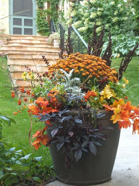 planting flowers for fall mum s the word for fall color in the garden