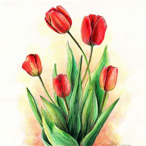 quot 5 tulips quot drawing art prints and posters by dasidaria