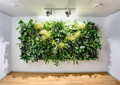 zimmerpflanze hoch blumen und pflanzen als wanddekoration voll im trend