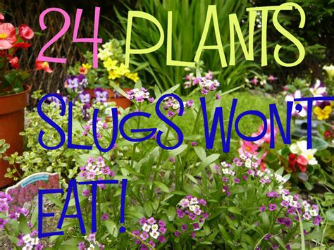 wont eat god s growing garden july 2014 great results with features giveaway winner