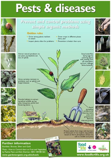 what garden pest or disease is that pest and plant disease guide organic gardening
