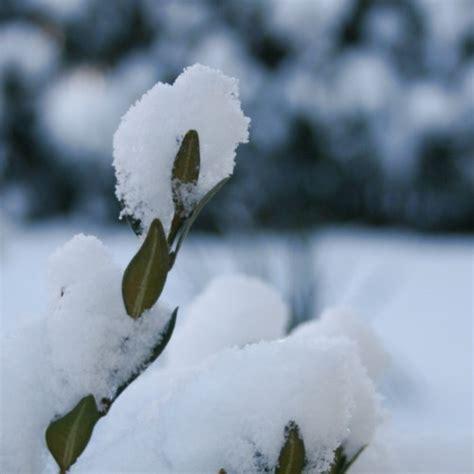 wann kommt der winter wann kommt er when does he arrive