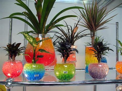 keunggulan menanam tanaman hias  hidroponik