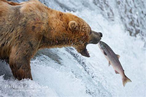 Tshirt Natgeo Wildlife most stunning photos from the kingdom wow amazing