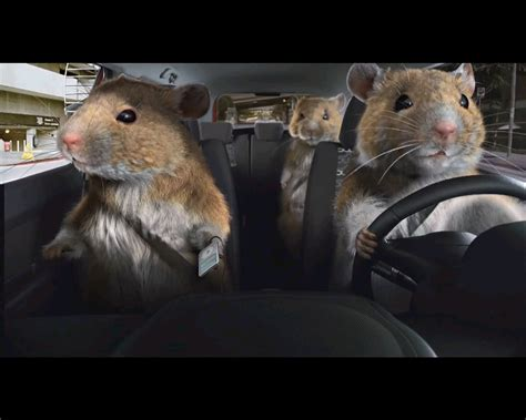 Kia Gerbil Commercial Car Photos On Hamsters Rock And