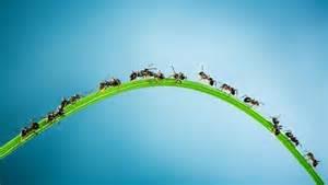 große ameisen im garten ameisen im zimmer was tun quelle