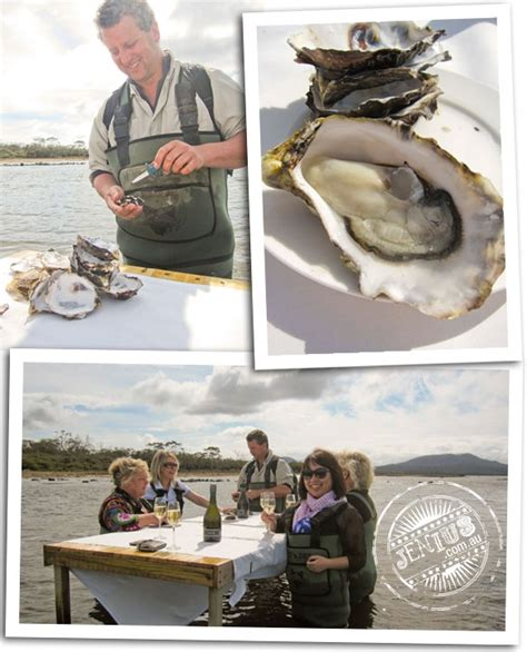 17 best images about oysters 17 best images about fascinating oyster farming on