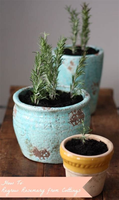 vegetables you can regrow 13 vegetables that you can regrow again and again