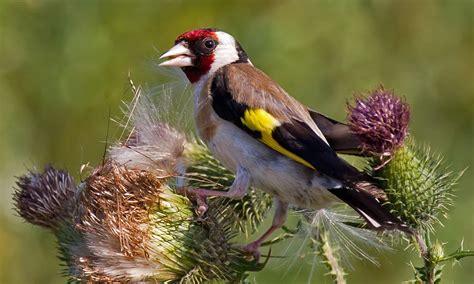 complete guide to british garden birds garden wildlife
