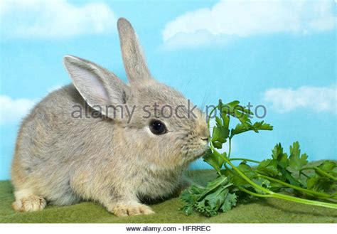 vegetables for rabbits lop eared rabbits diet vegetables dreamtoday