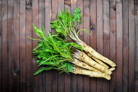 horseradish plant care  growing guide