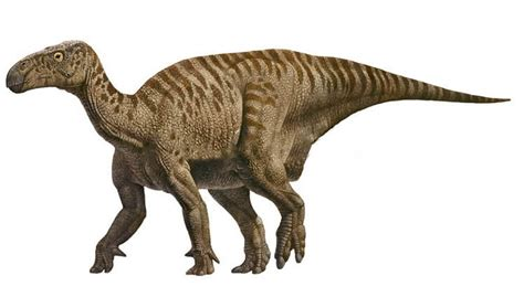 iguanodon pictures amp facts the dinosaur database