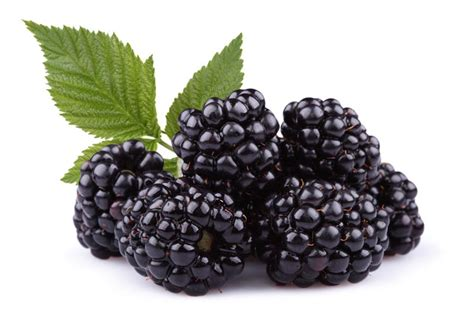 7 Berries You Should Eat by Those Berries You Should Eat Every Day Corner