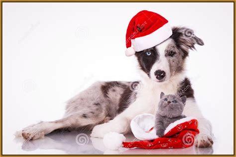 imagenes feliz navidad con perros fotos de perros y gatos de navidad archivos imagenes de