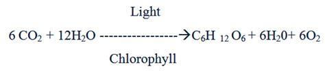 Balanced Photosynthesis Equation