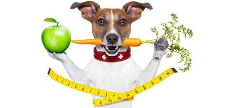 alimenti dietetici per cani piccoli amici pet shop chiaravalle an
