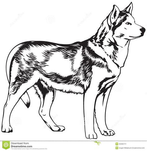 dog sled race coloring page dog coloring pages dog sled racing coloring pages coloring pages