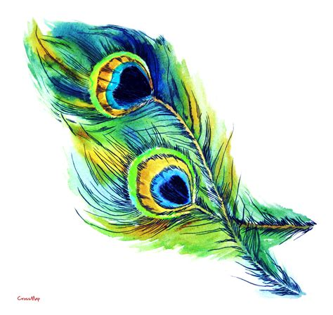 peacock feather clipart clipartandscrap