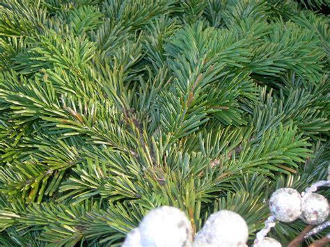 sturtz  copeland fresh  fragrant evergreen