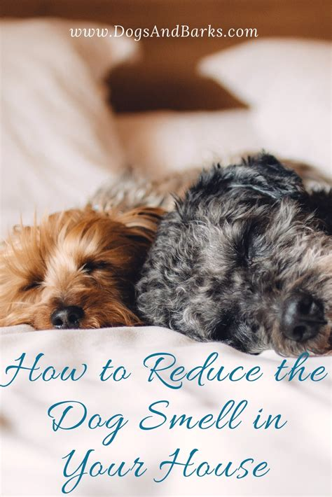 dog smell in house revealed how to reduce the dog smell in your house dogs and bark