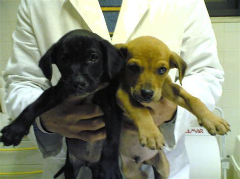 cani piccola taglia pelo corto da appartamento cuccioli piccola taglia pelo corto petpassion
