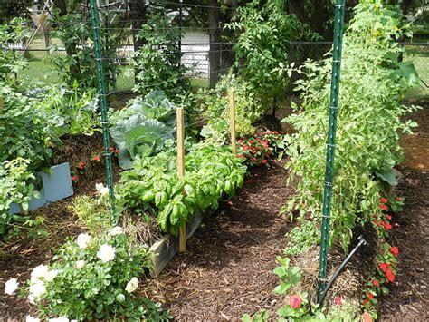 Gardening In Straw Bales by Straw Bale Gardens Ecoyards