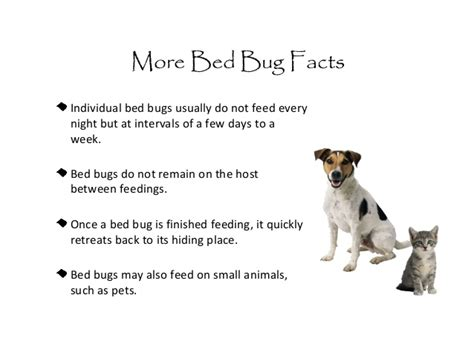 how often do bed bugs feed bed bugs in schools