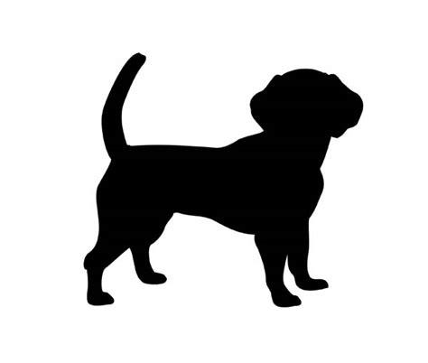 golden retriever puppies bakersfield ca golden retriever bakersfield