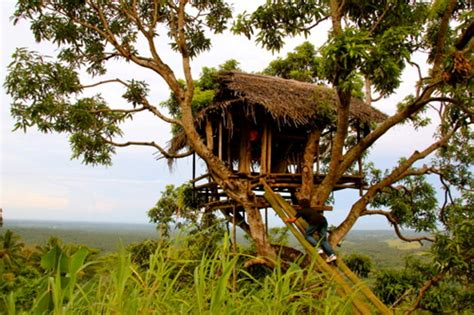 house for rent com bamboo tree house for rent best house design bamboo tree house accessories