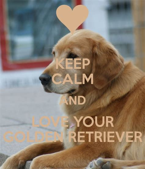 keep calm and golden retrievers 39 best images about keep calm on keep calm pink and the grinch