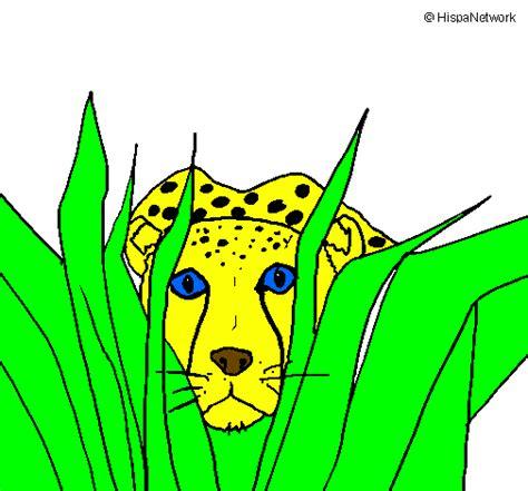imagenes de jaguares para dibujar desenho de guepardo pintado e colorido por usu 225 rio n 227 o