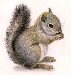 what color are squirrels best 25 squirrel illustration ideas on