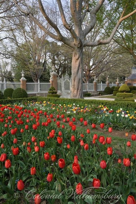 family garden williamsburg 17 best images about colonial williamsburg on