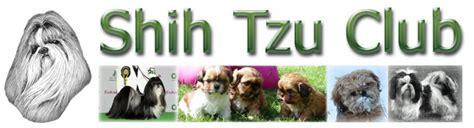 shih tzu health problems uk shih tzu health problems uk assistedlivingcares