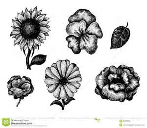 imagenes de flores dibujadas a mano raccolta dei fiori disegnati a mano in bianco e nero