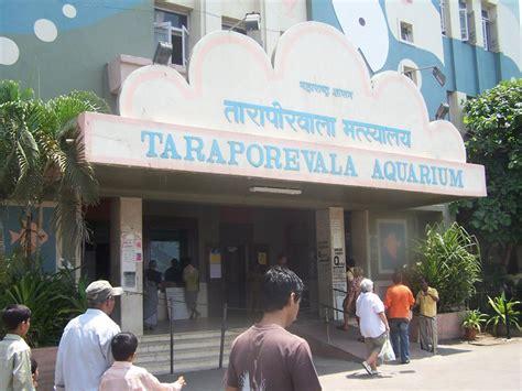 aquarium design mumbai taraporewala aquarium mumbai india
