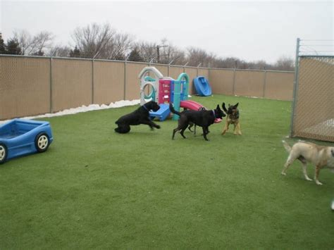 puppy play area petgrass in play area turf