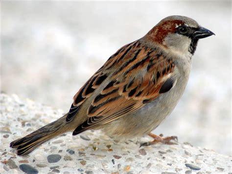 wild bird population reducing numbers speak up for the