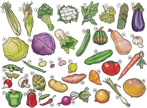 list of vegetables vegetables list