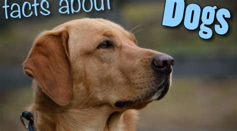 facts about puppies animal facts for archives page 9 of 10 active