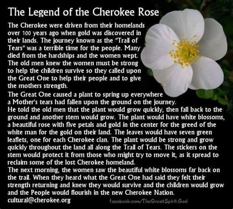 cherokee rose tattoo the legend of the history it